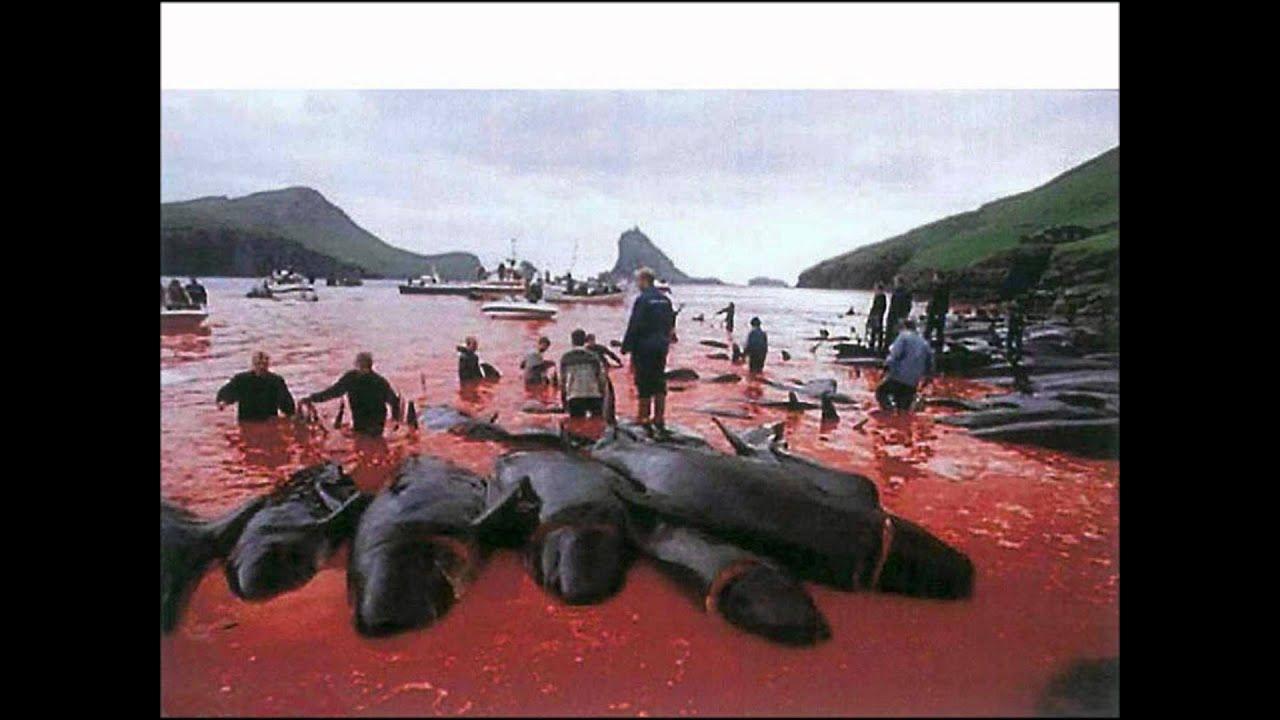 Greenpeace Rettet Die Wale