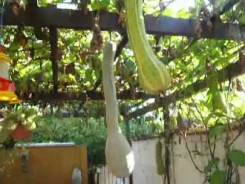 Pepino e uvas no cu - 3 5