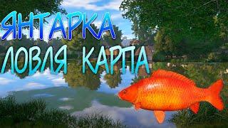 Русская Рыбалка 4 Янтарка ловля Карпа