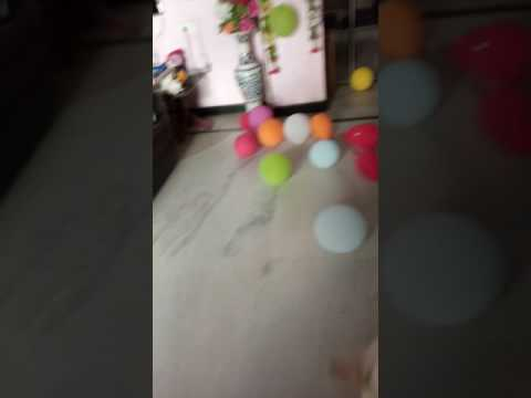 Excited dog playing with his birthday balloons
