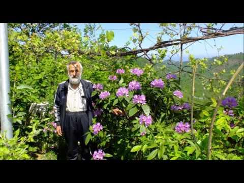Trabzon'da Bahar ve Çocuk Hakları