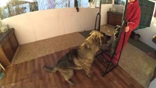 Пес впервые увидел себя в зеркале))))