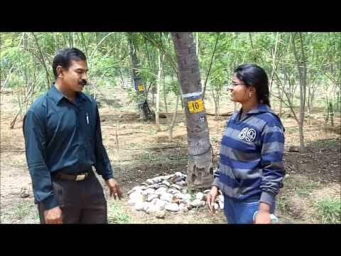 Moisture conservation in coconut garden Kannada BAIF Karnataka