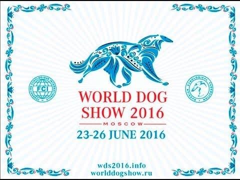 """Денис TV- выставка собак """" World Dog Show 2016 в Москве!"""" /Бордер-колли/Акита-ину/Бультерьер"""