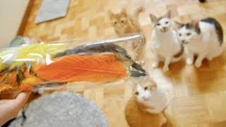 正常でいられなくなるAmazonの猫じゃらしセットがすごい