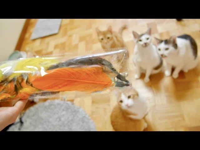 【興奮が止まらない】すっごい猫じゃらし見つけたぞ