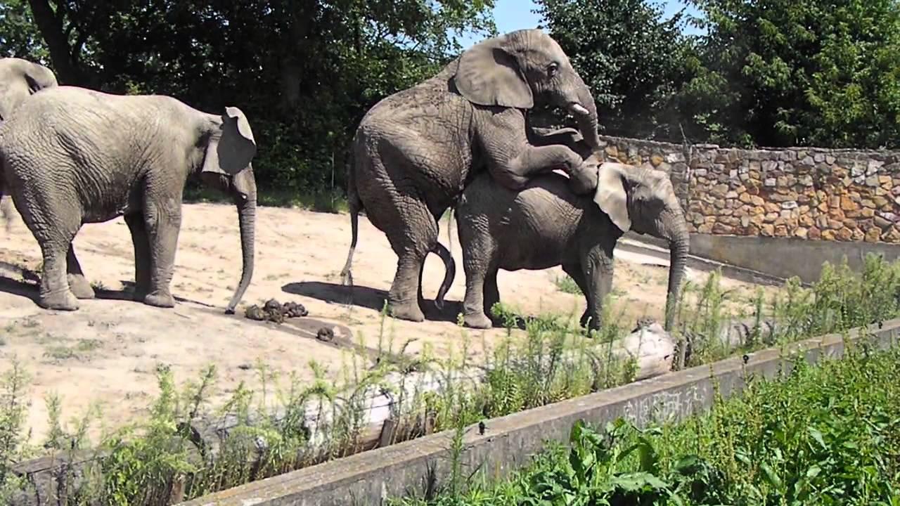 Get Zoo Sex