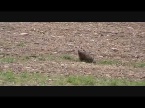 Drill Em' Outdoors- Groundhog Hunting 2014