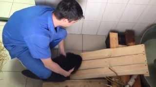 В харьковский городской приют для животных принесли бобриху