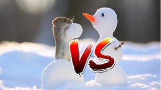 Мышь полевка съедает морковку у миниатюрного снеговика