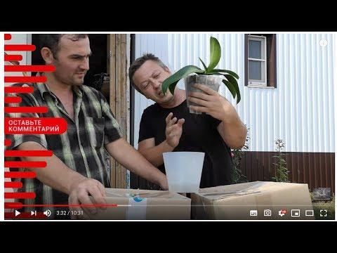 орхидея с мусорки дала ПЕТУХА! Какого? Жизнь вне орхидей 55