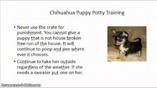 I can't potty train my chihuahua  FREE Mini Course