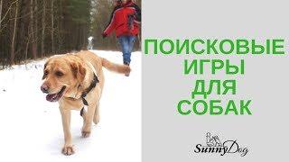 Поисковые  игры собаки