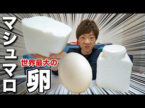 平成最後に世界最大のダチョウの卵で特大マシュマロ作ります!!