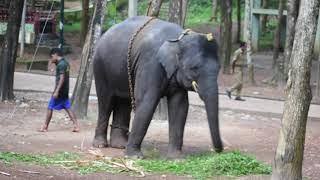 കോട്ടൂരിലെ ആനക്കുളി | Elephant bath at Kottoor elephant camp | Travel Diary