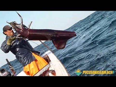 Pesca De Altura PUCUSANA - Calamar Gigante (POTA)