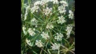 Plantes Vénéneuses et médina 0001