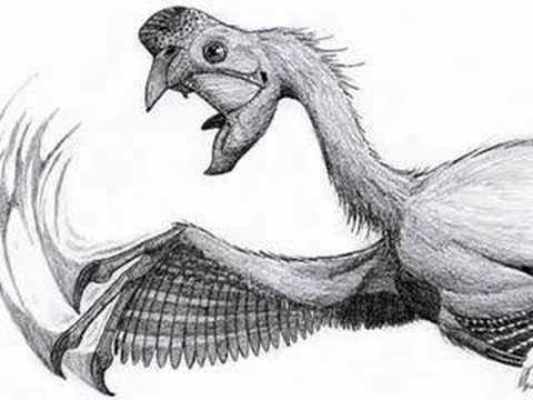 Tribute to Oviraptor