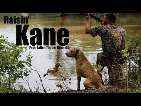 We Finally Got A Hunting Dog! | Training Kane To Duck Hunt (Chesapeake Bay Retriever)