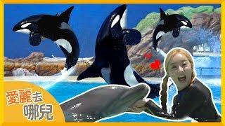 [愛麗去哪兒] 愛麗帶妳暢遊美國聖地亞哥海洋世界 | 愛麗和故事 EllieAndStory