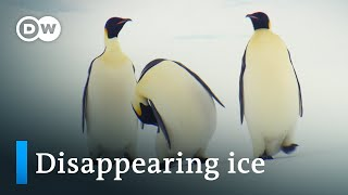 Climate change in the Antarctic | DW Documentary