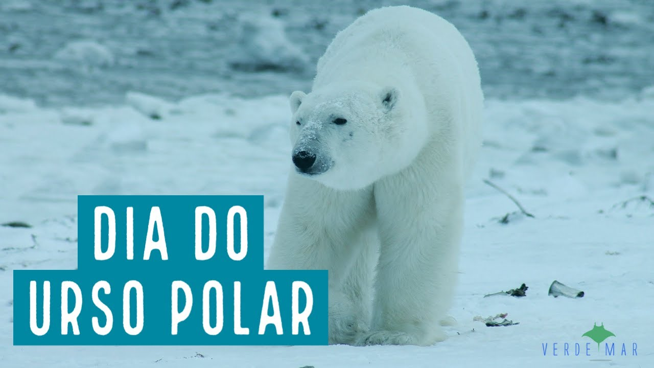 27 de fevereiro - Dia Internacional do Urso Polar