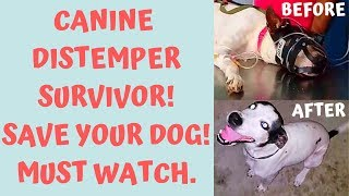 Canine distemper virus (C.D.V) treatment, How my dog survived by using Vitamin-C.