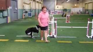 "Sweep Uki Agility ""live To Run Again"" Fundraiser"
