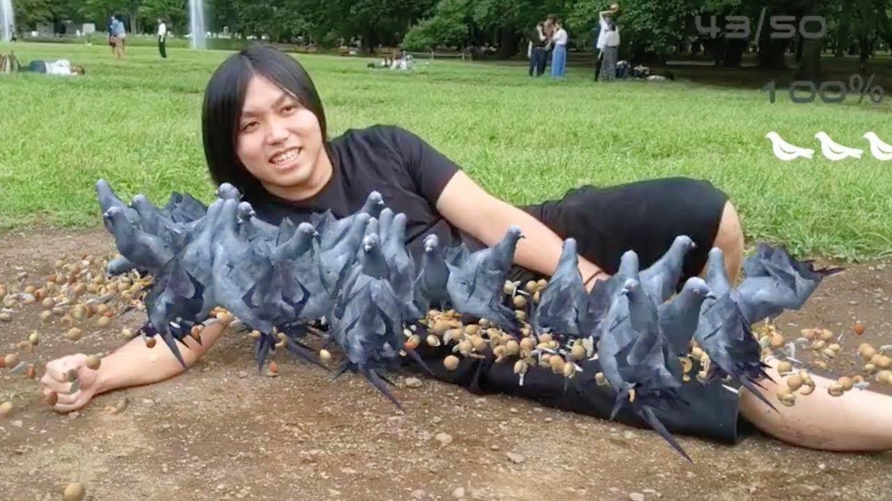 【ハト嫌い】トミーとハト49匹が一緒に写真を撮りますwwwww