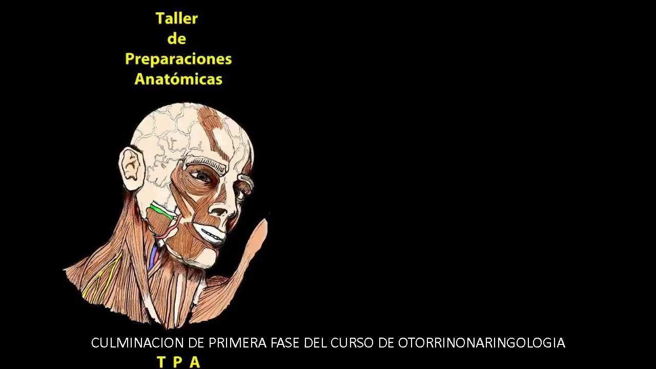Taller de Preparaciones Anatomicas: I CURSO DE ANATOMIA APLICADA A ...