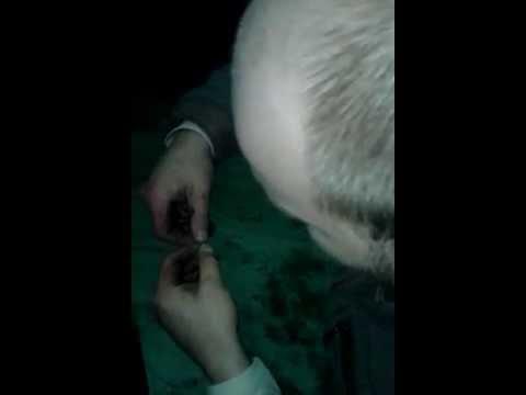 мондавошка прикол