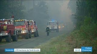 Incendie forêt de Bédenac (17)