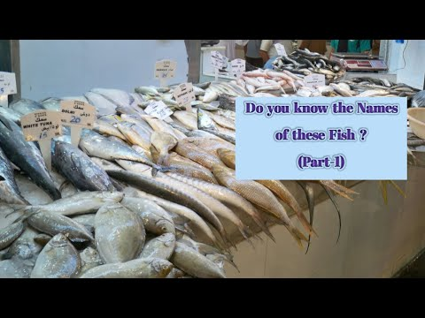 Fish Facts: All About Fishes   Fish Names In English (Part-1)   Edible Fishes