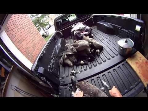 Cleaning a Canada Goose - Maximizing meat