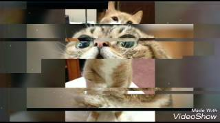 Очень смешные и прикольные фото котят !!! 😻 Советуем вам его посмотреть !!!