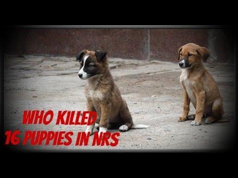 Who Killed those 16 Puppies NRS Kolkata | ১৬ টি কুকুরছানা হত্যার দায় কার