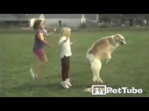 Amazing Jump Roping Dog - PetTube
