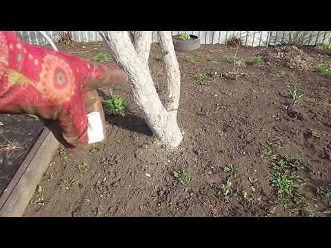 Вопрос: Чем подкормить яблоню во время цветения Какие удобрения использовать?