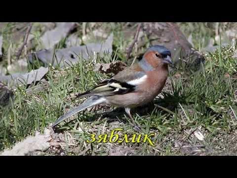 ВОДОПЛАВАЮЩИЕ ПТИЦЫ Фото Названия водоплавающих птиц