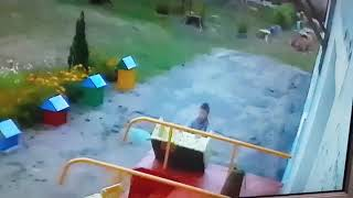 Из детсада в Новозыбкове утянули диванчик
