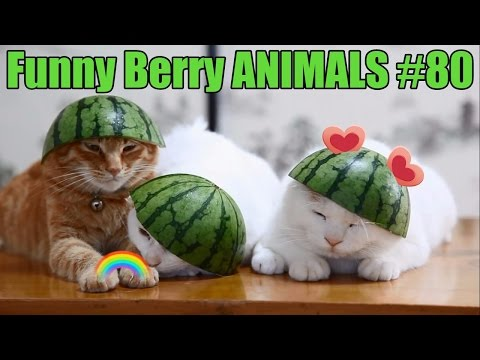 Сharming kittens of August 2016 | Funny Berry Animals #80