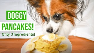 How To Make Doggy Pancakes // Percy the Papillon Dog