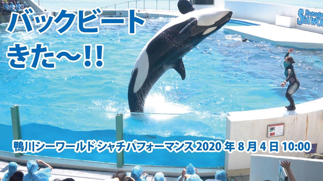 バックビート きた〜!!【2020年8月4日10:00 鴨川シーワールド シャチパフォーマンス】Killer whale performance, Kamogawa Sea World, Ja