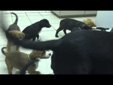 Rescued momma dog & puppies at the vet's office