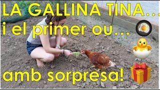La Gallina Tina i el seu primer ou! | Pagesos de ciutat