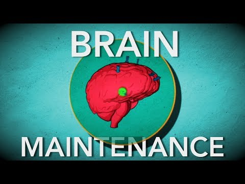 3 Habits to Improve your Brain | Boost Energy and Willpower This Year
