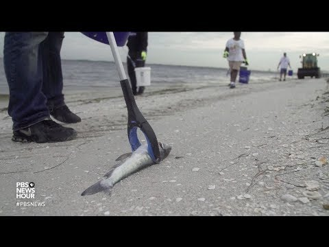 Florida's toxic red tide is a perfect storm for the Gulf Coast