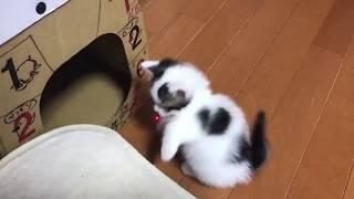 楽しみ方に個性がある子猫たちに癒される