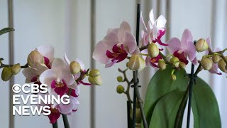 Plant parents boarding their orchids with an expert