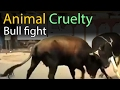 Animal Cruelty -  Bull fight - Animals fighting and killing videos